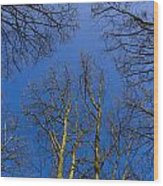 English Forest Trees Wood Print
