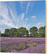 English Lavender Fields In Hampshire Wood Print