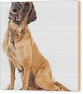 English Mastiff Dog With Tilted Head And Drool Wood Print