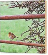 English Robin Wood Print
