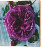English Rose - Purple Rose - Fragrant Rose Wood Print