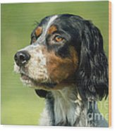 English Setter Dog Wood Print