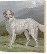 English Setter - Left Wood Print