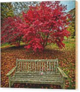 Enjoy The View Wood Print