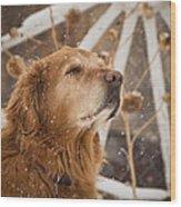 Enjoying The Moment - Golden Retriever - Casper Wyoming Wood Print