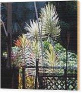 Enoka Place Wood Print