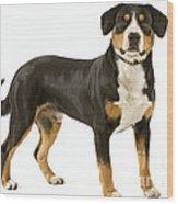 Entlebuch Mountain Dog Wood Print