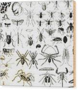 Entomology Myriapoda And Arachnida  Wood Print
