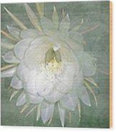 Epiphyllum Oxypetallum - Queen Of The Night Cactus Wood Print