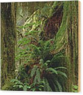 Epiphytic Sword Fern Wood Print