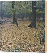 Epping 1 Wood Print