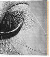 Equine Eye Wood Print