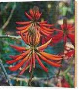 Erythrina Speciosa Wood Print