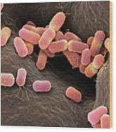 Escherichia Coli Bacteria Wood Print