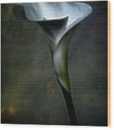 Essence Glow Of A Calla Lily Wood Print