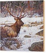 Estes Park Elk Wood Print