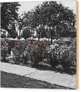 Esther Short Park Rose Garden Wood Print