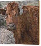 E.t. Highway Bull Wood Print