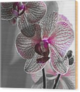 Ethereal Orchid Wood Print