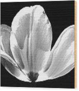 Ethereal Tulip  Wood Print