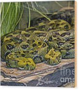 Ethiopian Mountain Vipers Wood Print