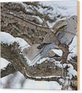 Eurasian  Collard Doves Wood Print