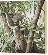 Eucalypt Wood Print
