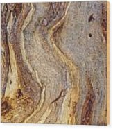 Eucalyptus Bark Wood Print