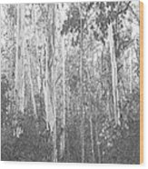 Eucalyptus Forest Wood Print