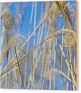 Eulalia Grass Native To East Asia Wood Print