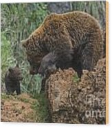 Eurasian Brown Bear 13 Wood Print