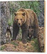 Eurasian Brown Bear 14 Wood Print