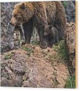 Eurasian Brown Bear 15 Wood Print
