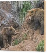 Eurasian Brown Bear 17 Wood Print