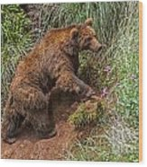 Eurasian Brown Bear 21 Wood Print