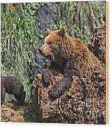 Eurasian Brown Bear 8 Wood Print