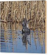 Eurasian Coot And The Bubles Wood Print