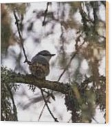 Eurasian Nuthatch Wood Print