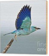 Eurasian Roller Wood Print by Johan Swanepoel