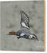 Eurasian Wigeon Flying Wood Print