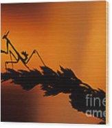 European Devil Mantis Wood Print