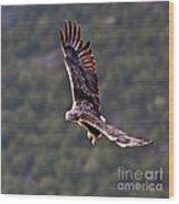 European Flying Sea Eagle 4 Wood Print