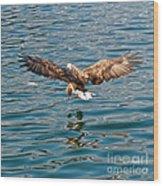 European Flying Sea Eagle 6 Wood Print