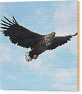 European Flying Sea Eagle 7 Wood Print