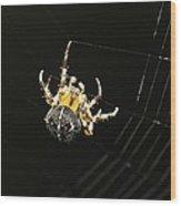 European Garden Spider Wood Print