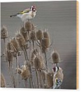 European Goldfinch Wood Print