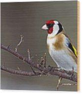 European Goldfinch  Wood Print