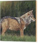 European Grey Wolf Wood Print