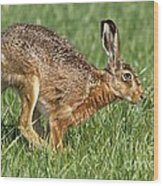European Hare Wood Print
