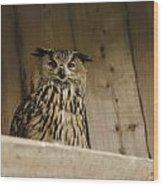 European Owl Wood Print